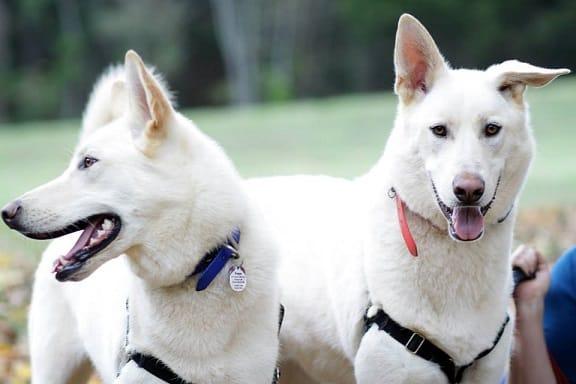 Freya & Nikolai